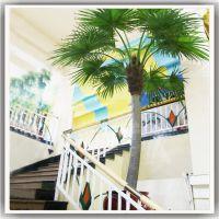 哪里有仿真蒲葵树卖 广州松涛仿真树定做 人造椰子树老人葵