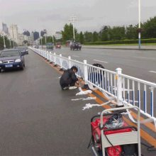 锌钢道路防护栏 河源机动车防撞隔离栅价格 清远京式交通围栏