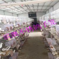 滨澳厂家现货批发鸽笼 三层十二位鸽子笼 四层十六位鸽子笼 优质鸽笼齐全 15531818087