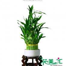 广州植物出租,花草出租,花卉出租,盆栽出租