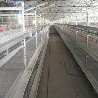 直销肉鸡笼舍饲养 层叠肉鸡笼 鸡笼全套设备 笼具定制