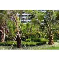 上海庭院景观施工上海花园庭院设计上海别墅庭院设计施工