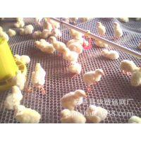 【厂家供应】养鸡养殖网、养鸭网、养鸡网、塑料网、家禽养殖网