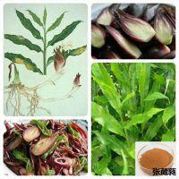 野生茗荷提取物10:1 蘘荷速溶粉 野姜浓缩汁 蘘草蔬菜粉 新鲜阳荷姜浸膏