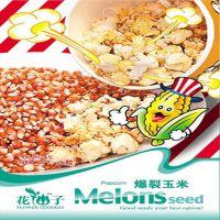 批发农作物8种玉米种子 种子迷你装蔬果种子 爆裂玉米种子30粒