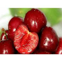 40公分红樱桃树苗批发价8元