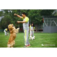 南开宠物犬培训价格-东方名仕(在线咨询)