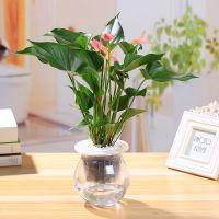 武汉办公室绿化植物销售价格报价,武汉立体植物墙设计施工维护
