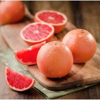 平和红宝石葡萄柚苗|红皮红肉葡萄柚树苗价格