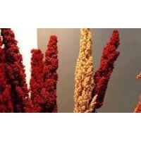 玻利维亚藜麦进口清关流程