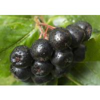 厂家直销美国进口野樱莓浓缩清汁
