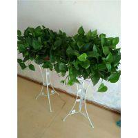 花卉林婚庆鲜花店(图)-开业植物要选什么-汉阳开业植物