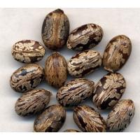 青岛代理进口蓖麻籽清关是什么流程