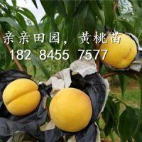 成都亲亲田园甜樱桃种植农民专业合作社