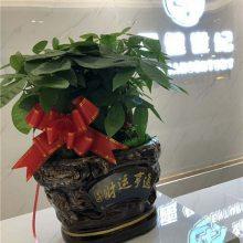 开业植物要选什么-开业植物-武汉花卉林婚庆鲜花店(查看)