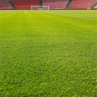 足球场假草坪造价 足球场假草坪价格 小区绿化仿真草皮