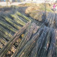 2.3米-2.5米优质竹竿批发 江西厂家发货 量大从优