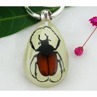 花鸟市场热销工艺品 昆虫琥珀夜光钥匙扣