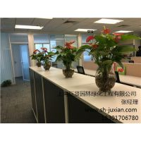 静安区植物租赁包年服务 静安区盆栽植物价格表 静安区租摆植物价格表 巨贤供