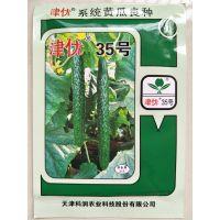 津优35黄瓜种子高产耐低温弱光越冬早春温室 20克