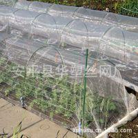 【现货供应】防虫网、蔬菜大棚防虫网、尼龙防虫网、蔬菜防虫网