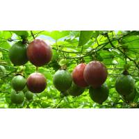 白香果开花用什么肥料好 百香果高钾高钙冲施肥快速膨果