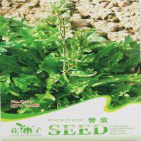 销售蔬菜野菜种子 蔬菜种子 荠菜种子(约100粒)量大按斤批发