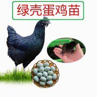 绿壳蛋鸡介绍,正宗绿壳蛋鸡苗批发
