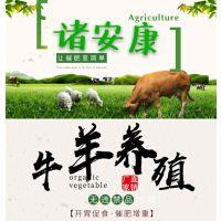 肉牛养殖方法 肉牛催肥饲料添加剂 牛吃什么长的快 催肥必备诸安康