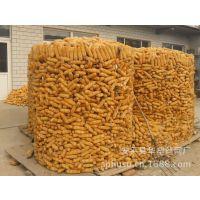 供应圈玉米网、存储玉米网、玉米网