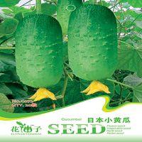 批发瓜果蔬菜日本小黄瓜种子 阳台种菜 阳台菜园 蔬菜种子20粒