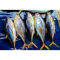 青岛港进口报关行进口金枪鱼报关需要什么资质和注意问题