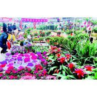 呈贡提高经济发展质量 建设斗南花卉小镇5A级景区花道花卉成为云南的鲜花批发基地