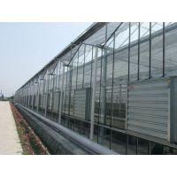 玻璃温室大棚价格多少钱?千汇牌智能温室建造