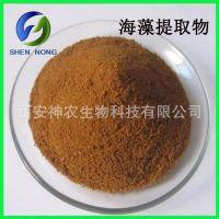 海藻提取物10:1 常规规格 海藻多糖 现货包邮 量大从优
