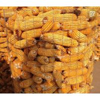 圈玉米专用铁丝网厂家@武强圈棒子钢丝网@圈苞谷钢丝网直接销售