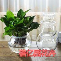 水培花盆批发绿萝盆栽水培玻璃花瓶 透明圆球型花盆容器送定制篮