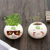 奇趣小创意植物室内净化空气创意花卉吸甲醛好养盆栽送礼种子创意