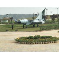 军事展出租飞机模型出售恐龙出租出售军事展价格