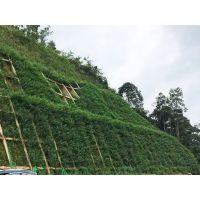 混凝土边坡绿化 铁路边坡绿化 客土喷播挂网河南景绣同行之选 价格优惠