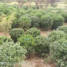 青州苗圃直供工厂绿化植物苗木,承接环保设备厂绿化施工