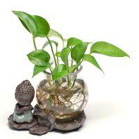 绿萝花盆玻璃花瓶透明桌面创意禅意小和尚摆件插花铜钱草水培容器