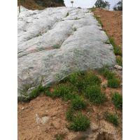铜仁矿区复绿快生长的草种草籽
