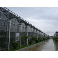 玻璃温室 智能玻璃温室 文洛式玻璃温室 玻璃温室工程一条龙服务