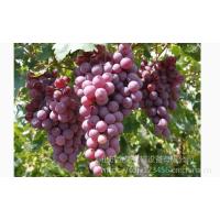 树莓桑葚酿酒挤压榨汁机 米酒糟过滤压榨机山东金亿机械加工果蔬液压榨汁机