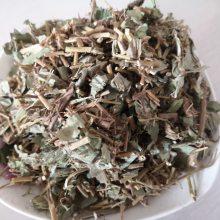 矮地茶功效与作用 平地木哪里购买便宜 多少钱一公斤