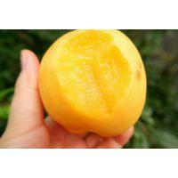 供应山东黄桃原产地现摘现发,网销批发黄桃 黄桃源产地一件代发招代理
