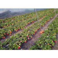 草莓专用水溶肥草莓专用桶肥 瀚森农业