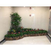 广州科学城办公室植物出租 室内绿植租赁租摆