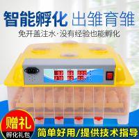 鸟蛋鸽子全自动孵化机小型迷你鸡蛋孵化器家用型孵蛋器孵化箱新品